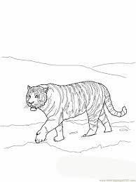 primaryleap co uk bengal tiger colouring page worksheet with