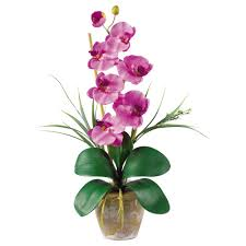 Orchid Cut Flowers - flowers orchid the home depot