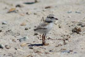 field notes citizen science at wellfleet bay a mass audubon blog