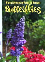 Plant Flower Garden - 634 best gardening with kids images on pinterest gardening tips