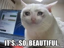 Cat Meme Maker - it s so beautiful crying cat meme generator drawing art gallery