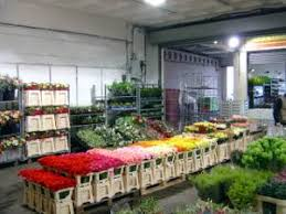 wholesale flowers near me liverpool wholesale flowers plants merseyside wholesale