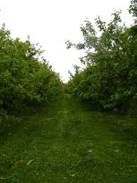 goadirondack com find out why adirondack coast apple orchards are