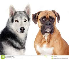 Types Of Dogs Different Breeds Of Dogs And Pics Dog Breeder