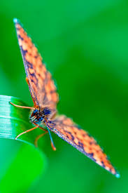 royalty free buttocks butterfly green colors pictures images and