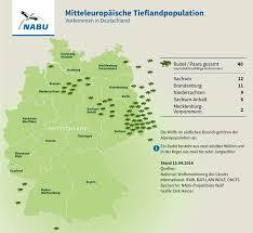 best 25 wölfe in deutschland ideas only on pinterest wolf