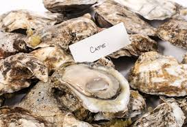 fresh wild cape oysters