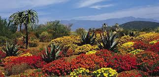 Kirstenbosch Botanical Gardens Kirstenbosch National Botanical Garden Reviews Tripexpert
