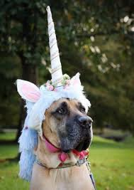Funny Halloween Animal Costumes 21 Danes Costumes Dane Dog Costumes