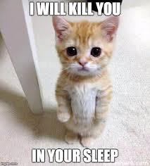 Sleeping Cat Meme - an introvert s strange sleeping disorder introvert spring
