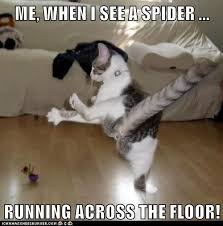 Spider Meme - lolcats spiders lol at funny cat memes funny cat pictures with