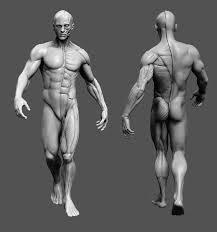 Human Anatomy Reference 330 Best Anatomy U0026 Topology Images On Pinterest Anatomy Anatomy