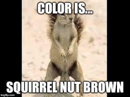Squirrel Nuts Meme - squirrel nuts meme generator imgflip
