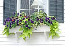 window flower boxes u2013 home design