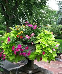 Plant Combination Ideas For Container Gardens Best Summer Container Garden Ideas 56 Garden Ideas Gardens And