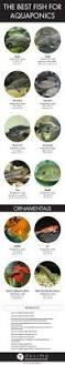 395 best aqua hydroponics images on pinterest hydroponics