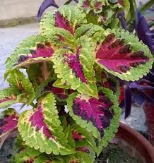 2 answers how to identify ornamental plants quora
