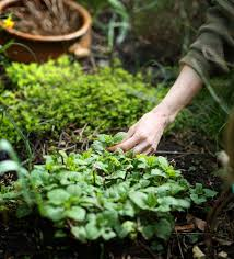 How To Start A Garden Bed 52 Best Yard Compost Images On Pinterest Garden Ideas Garden