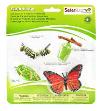 butterfly kits live butterflies caterpillars larvae for sale