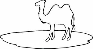 bactrian camel outline coloring super 194530 coloring pages