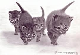 imagenes a lapiz de gatos dibujo hiperrealista gatos uno para todos comprar dibujos