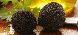 where can you buy truffles where to buy truffle trees