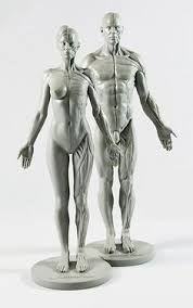 Female Anatomy Figure Female Anatomy Figure 10 5 Inch Anatomical Reference For Artists