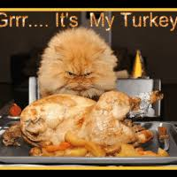 happy thanksgiving gifs search find make gfycat gifs