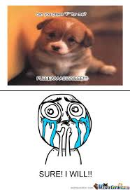 Cute Puppy Meme - do it for the cute puppy by failed meme center