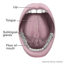 Cancer On Floor Of Mouth Pictures by File Mouth And Tongue Jpg Wikimedia Commons