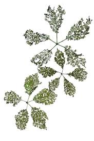 433 best leaves images on pinterest botany plants and green plants