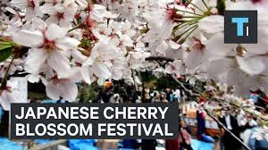 here u0027s what it u0027s like to go to a cherry blossom festival in japan