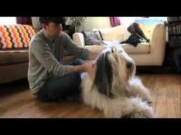 afghan hound dogs 101 dogs 101 02 02a olde english sheepdog webrip lks 1 mkv old