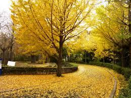 Autumn Colors Yokohama Autumn Foliage 2017 Top 10 Places To See Autumn Colors