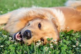 dog poison prevention burbank veterinarian