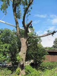 waukesha damage tree repair waukesha tree removal