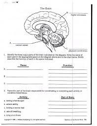lesson assignment nervous system plan sample ima elipalteco