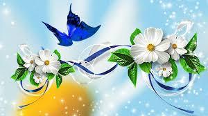 beautiful butterflies photos butterfly on flowers wallpaper 8