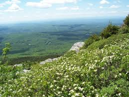 New Hampshire vegetaion images Sheep laurel heath krummholz monadnock mountain monadnock jpg