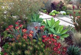 Drought Tolerant Landscaping Ideas Outstanding Drought Tolerant Landscaping California Images Best