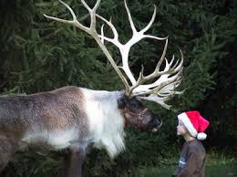 santa and live reindeer to visit d r sports center in december