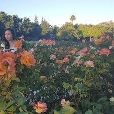 Flower San Jose - san jose municipal rose garden 2214 photos u0026 341 reviews parks