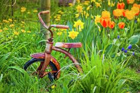A Garden Of Flowers by A Rusty Tricycle Sits In A Garden Of Colourful Spring Flowers