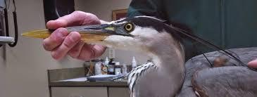 wildlife rehab news nwri omaha ne