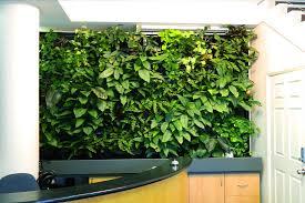 vertical indoor garden vertical garden ideas u2013 imacwebscore com