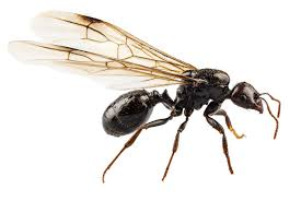 How To Get Rid Of Backyard Flies by How To Get Rid Of Ants How To Get Rid Of Ants