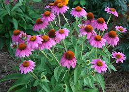 native plants illinois there are many good reasons to use native plants in your landscape