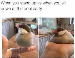 Chubby Meme - pool party me chubby bird dailypicdump