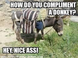 Funny Donkey Memes - donkey joke jpg just laugh with alg礬rian pinterest funny