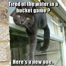 Tired Cat Meme - tired of the water in a bucket game lolcats lol cat memes